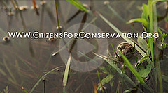 Citizens for Conservation Citizens for Conservation